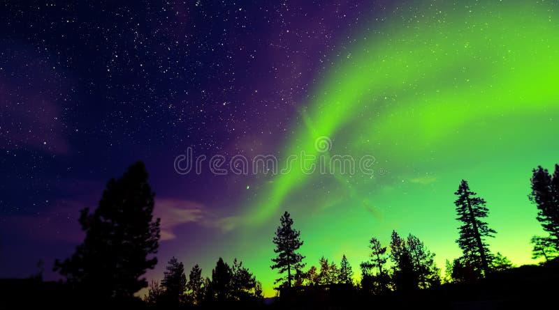 北极光在树的极光borealis 免版税库存图片
