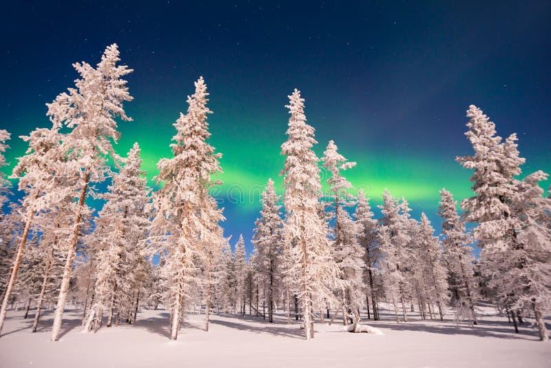 北极光,极光Borealis在拉普兰芬兰 免版税图库摄影