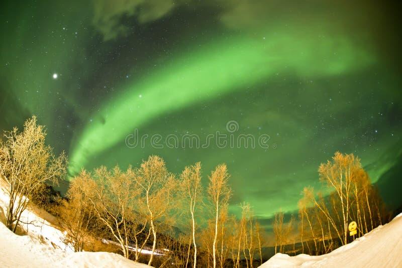 北极光(极光borealis) 库存图片
