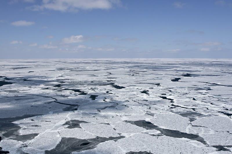 北极加拿大 库存照片