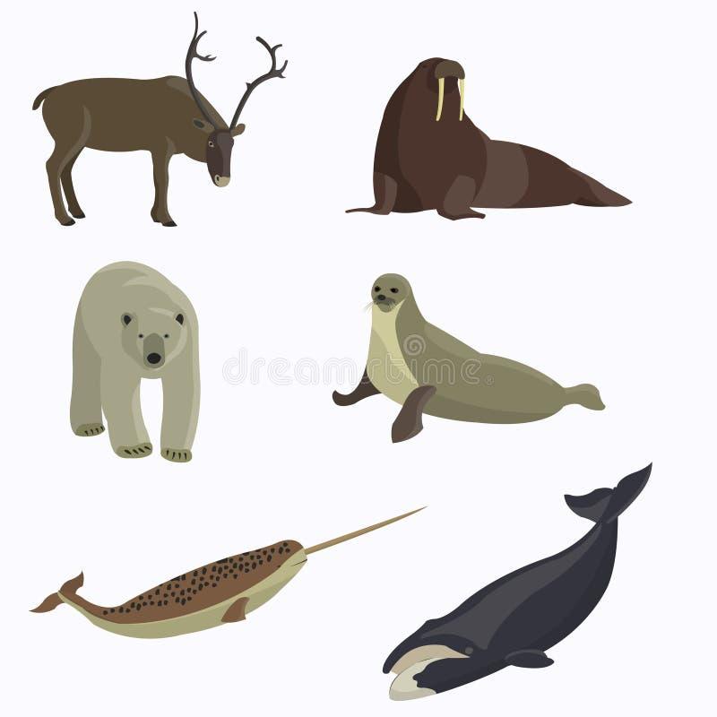 北极动物收藏 向量例证