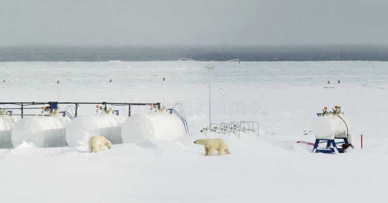 北极熊集会文明 图库摄影