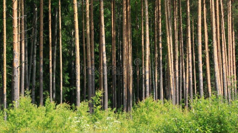 北森林 库存图片