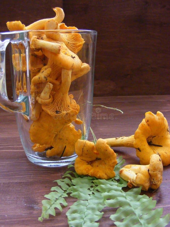 北欧和俄国烹调:黄蘑菇蘑菇垂直的照片 免版税库存图片