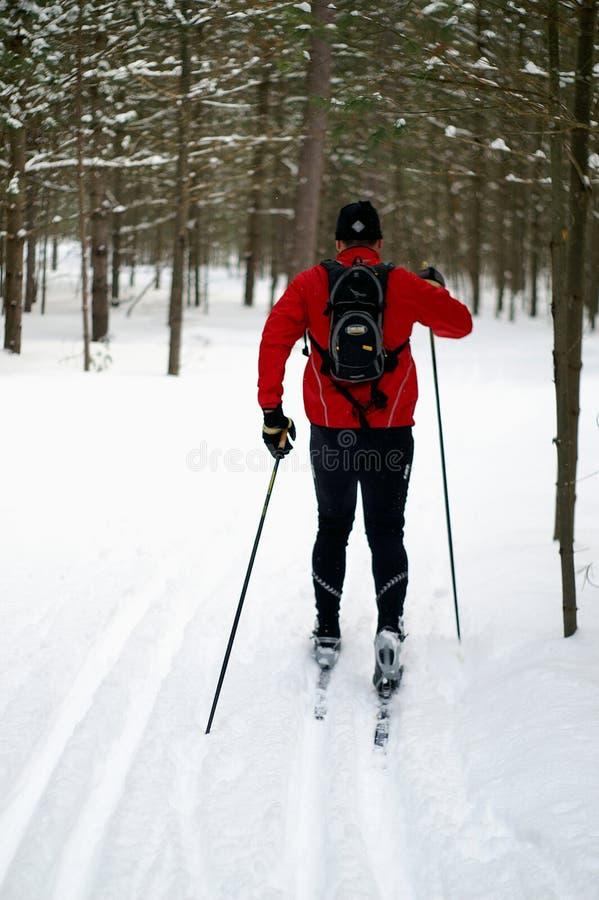 北欧滑雪者 免版税库存图片