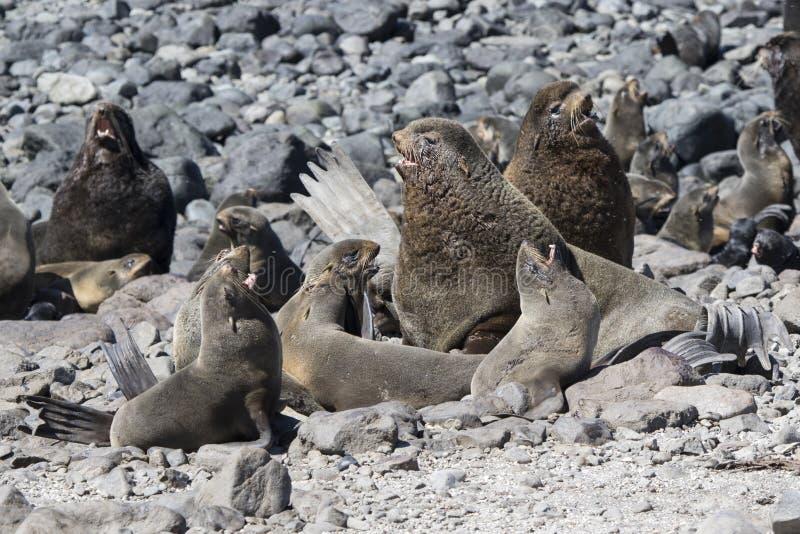 北海狗群闺房在一热的天 库存图片