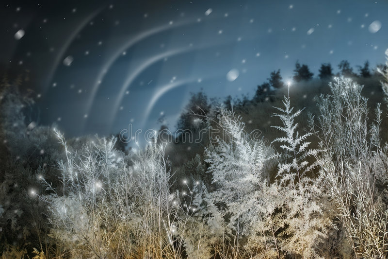 北的圣诞灯 免版税图库摄影