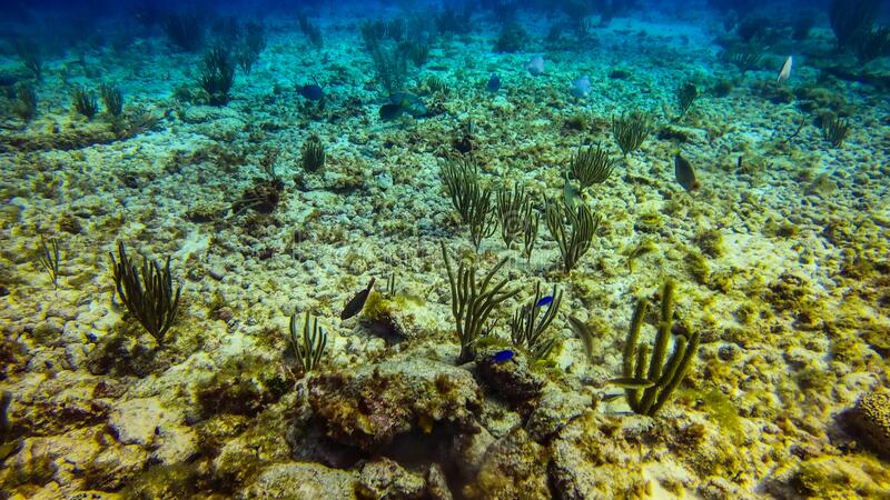 北美坎昆美丽的海洋生物珊瑚 免版税图库摄影