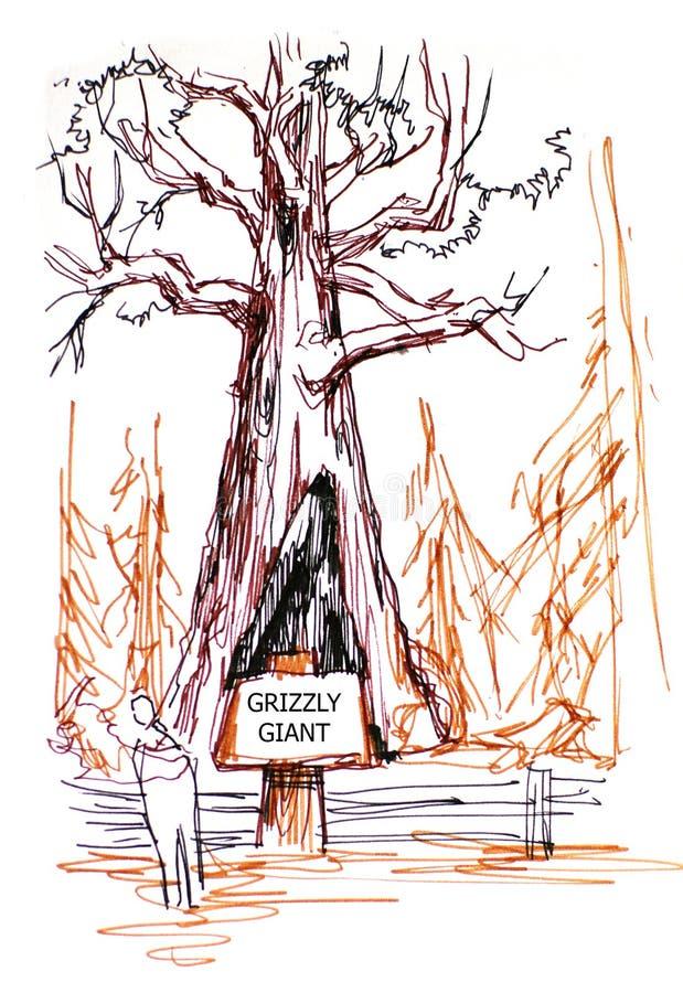北美灰熊巨型树在美国加州红杉公园 向量例证