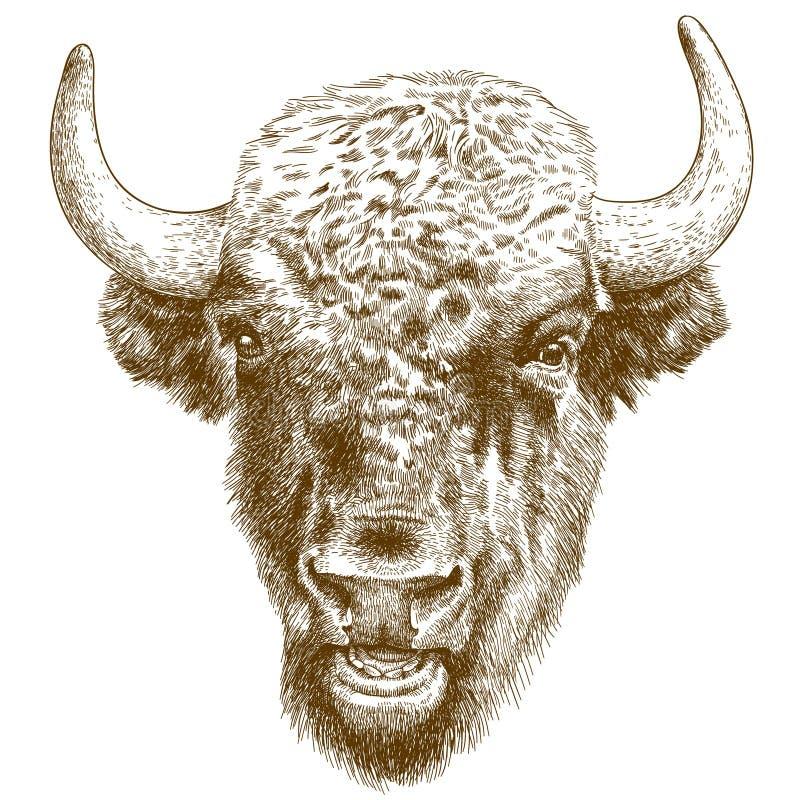 北美野牛头的板刻古色古香的例证 皇族释放例证