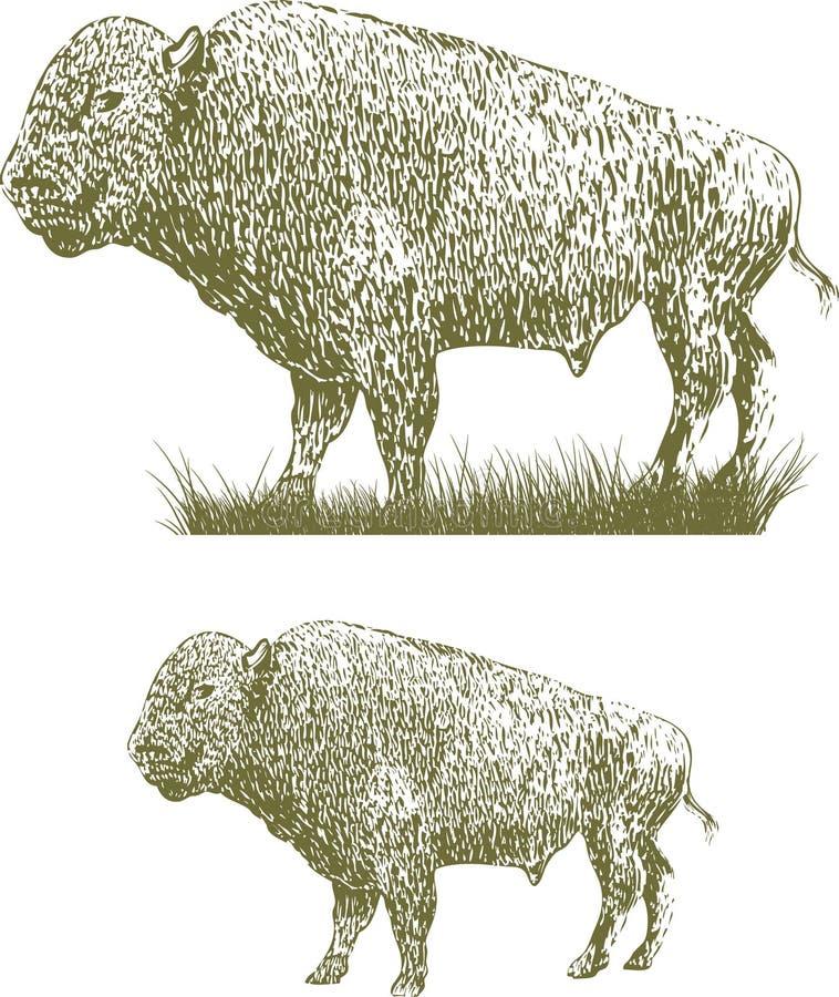 北美野牛木刻 向量例证