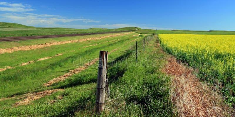 北达科他油菜在北达科他美国大草原农田调遣 免版税库存图片