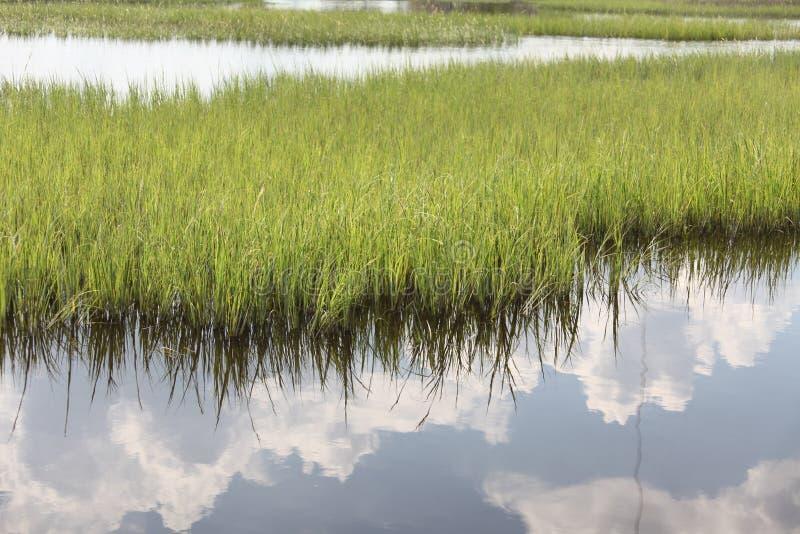 北部佛罗里达沼泽  库存照片