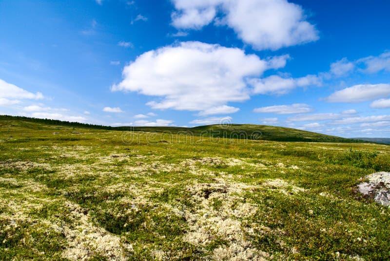 北部俄国寒带草原 免版税库存照片