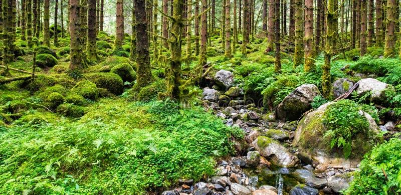 北部斯堪的纳维亚杉木森林地点令人惊讶的自然风景视图:斯堪的纳维亚山脉,挪威 o 库存照片