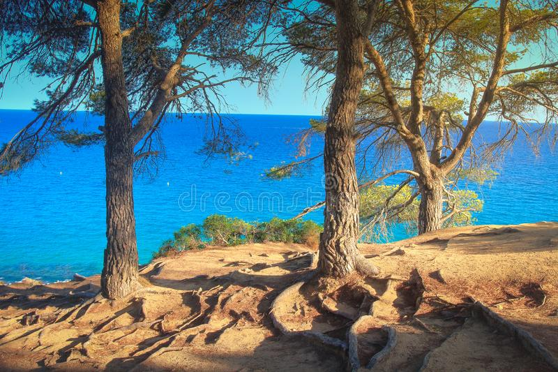 北部海岸克利特希腊地中海的本质 在地中海通过绿色杉木森林杉木树干和蓝色海的看法天际的 库存照片
