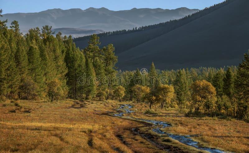 北部蒙古的森林在秋天 库存图片