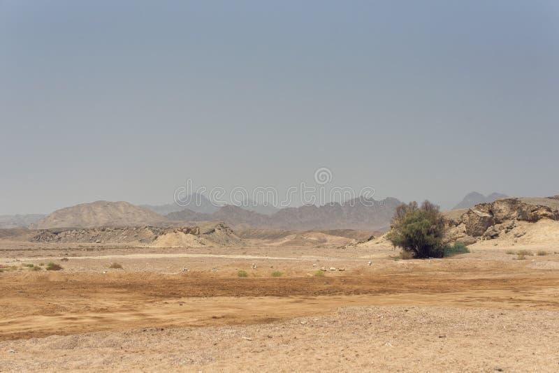 北非洲的狂放的风景 图库摄影