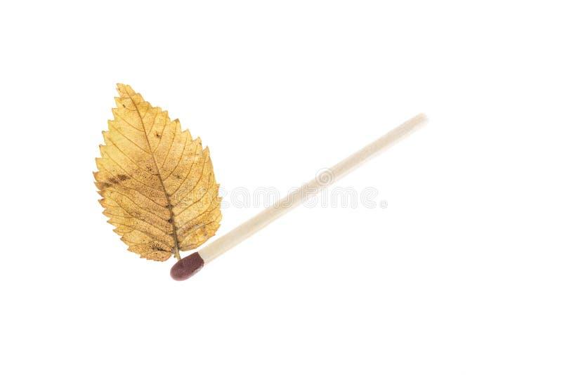 匹配在白色和黄色叶子隔绝的棍子 库存图片