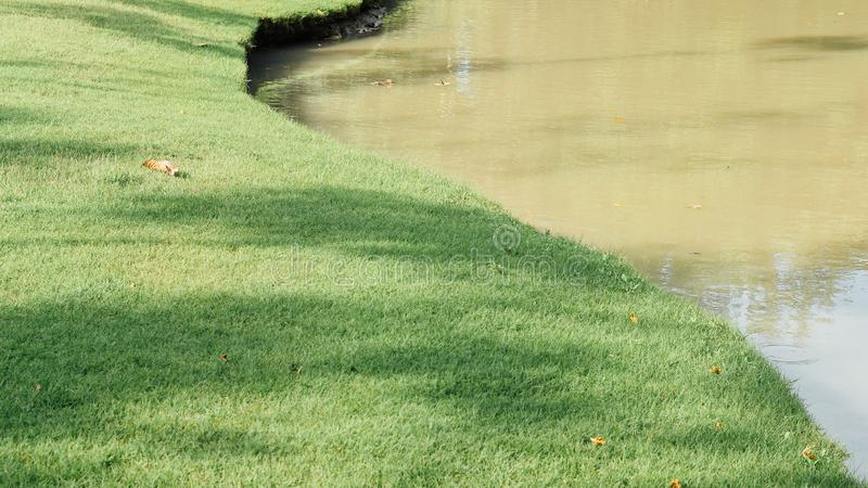 区域是富有的与水和植物 库存照片