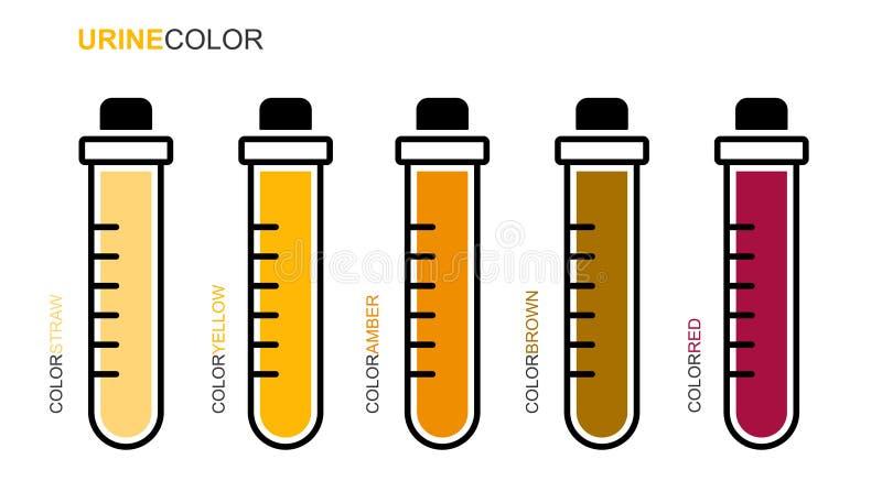 医学化验管尿彩色组 库存例证