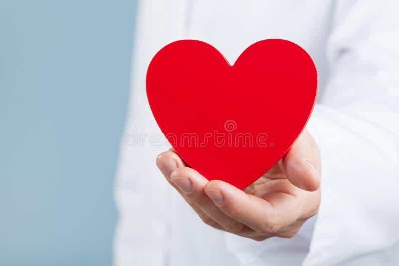 医治拿着红色心脏在他的手上的心脏科医师 心脏病学和心脏病概念 库存照片