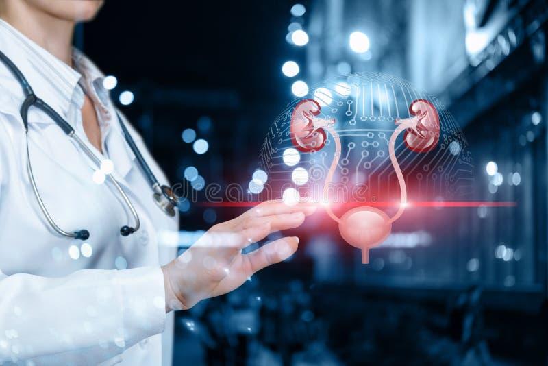医生扫描泌尿系统 免版税图库摄影