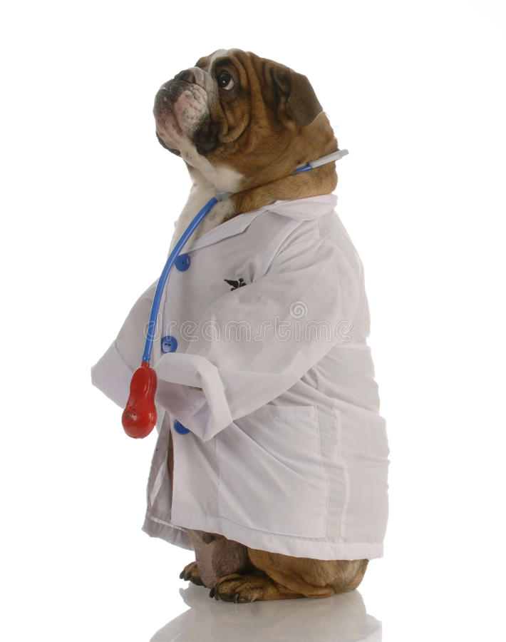 医生狗装饰了 库存照片