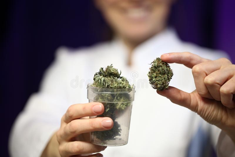 医疗大麻在医生的手上 大麻替代医学 免版税库存图片