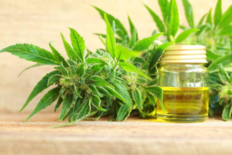 医疗大麻油萃取物和大麻植物 免版税库存图片