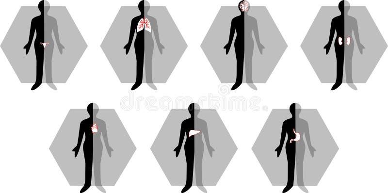 医疗机体女性的图标 免版税库存图片
