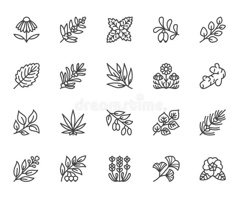 医疗草本平的线象 药用植物海胆亚目,蜜蜂花,玉树,goji莓果,蓬蒿,姜根,麝香草 皇族释放例证
