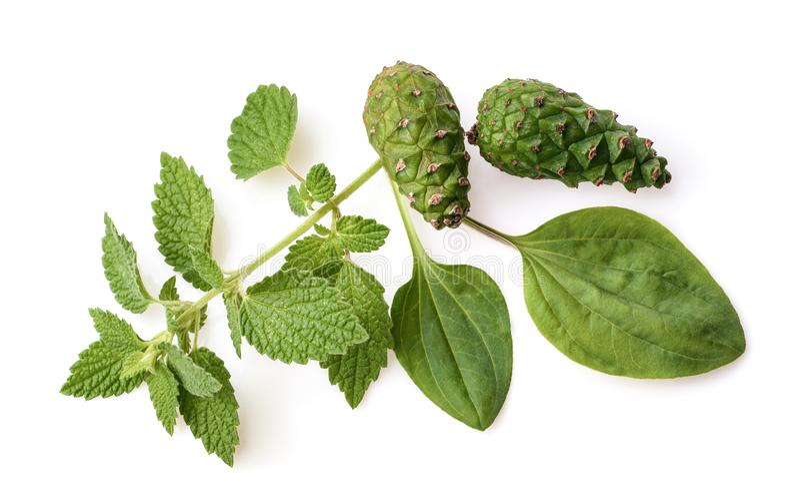医药草本和植物 医学草本 与健康医疗植物的草本成份 绿色叶子,供选择的药物 ?? 库存图片