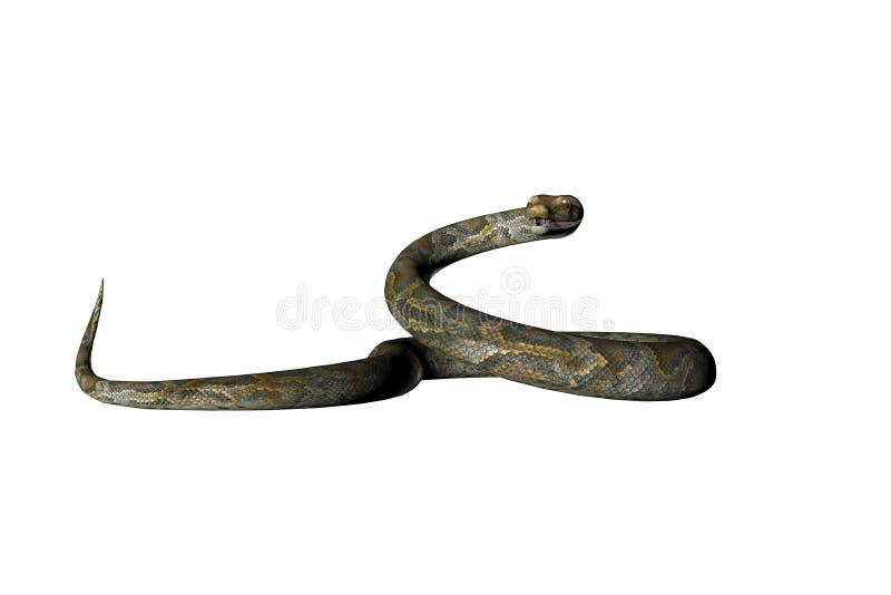十一查出的蛇 皇族释放例证
