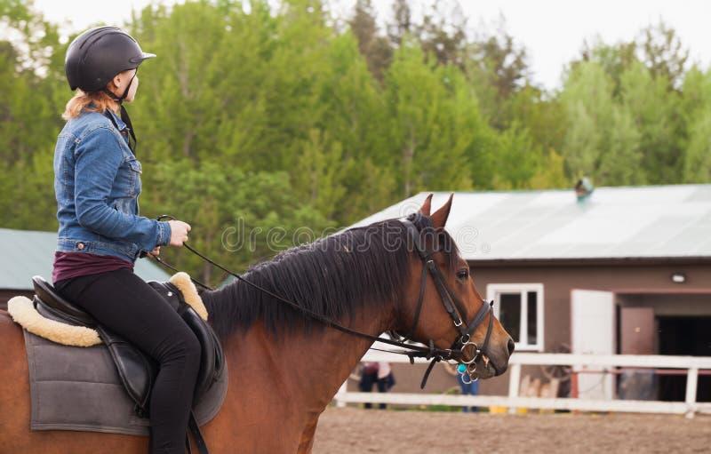 十几岁的女孩骑棕色马 免版税库存图片