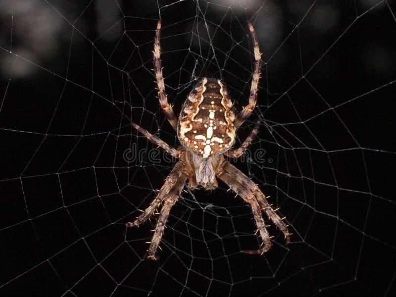 十字架后面蜘蛛 库存照片