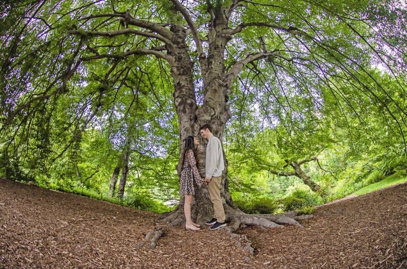 千福年的夫妇面对面在一棵大树下 库存照片