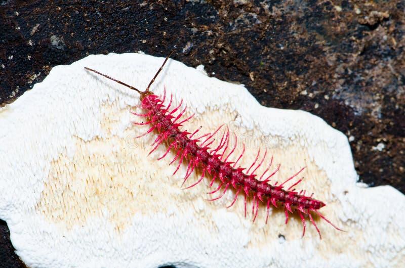 千足虫在热带雨林里 库存照片