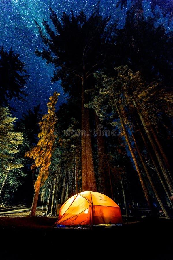 升帐篷在森林里 免版税库存照片