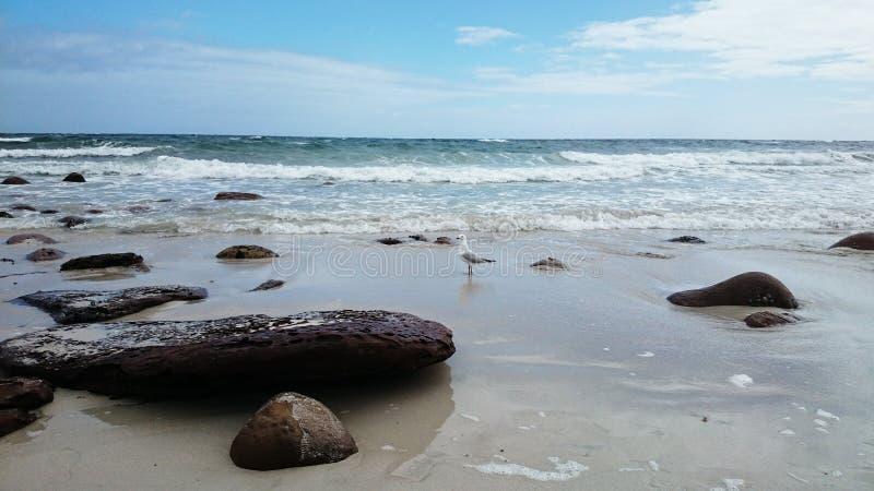 升火海滩视图 免版税库存图片