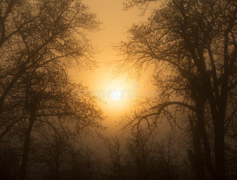 升起通过大雾的太阳,围拢由树 免版税库存图片