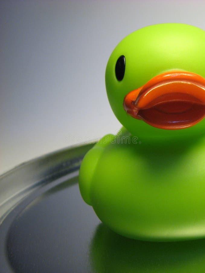 半的鸭子 图库摄影