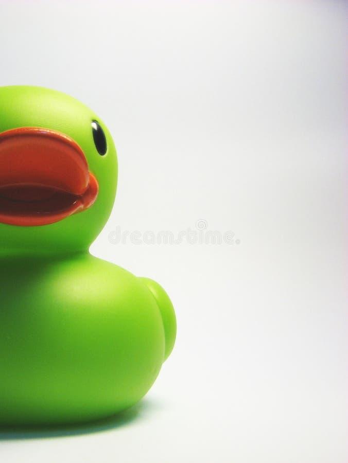 半的鸭子 库存图片