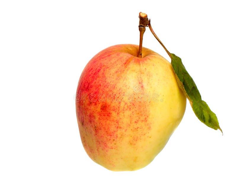 半红色苹果 免版税库存照片