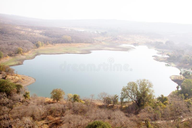 半落叶森林与湖泊景观 免版税库存照片