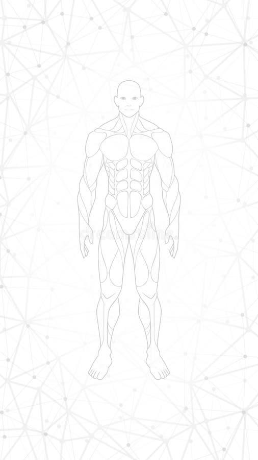 半音灰色白色墙纸背景 塑造外形形状人体解剖学霓虹全息图被射出在白色背景,科学幻想小说i 皇族释放例证