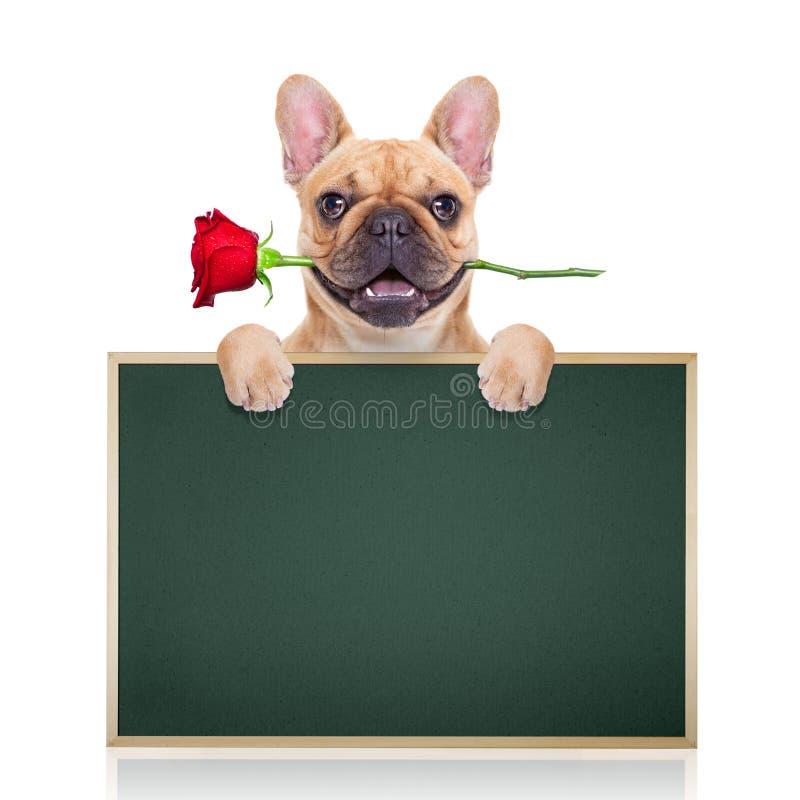华伦泰狗 库存图片