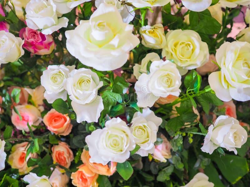 华伦泰的五颜六色的玫瑰花 免版税库存图片