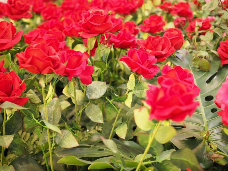 华伦泰的五颜六色的红色玫瑰花 库存照片