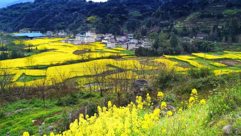 华山陕西渭南,罗平县,云南省北峰  免版税库存照片